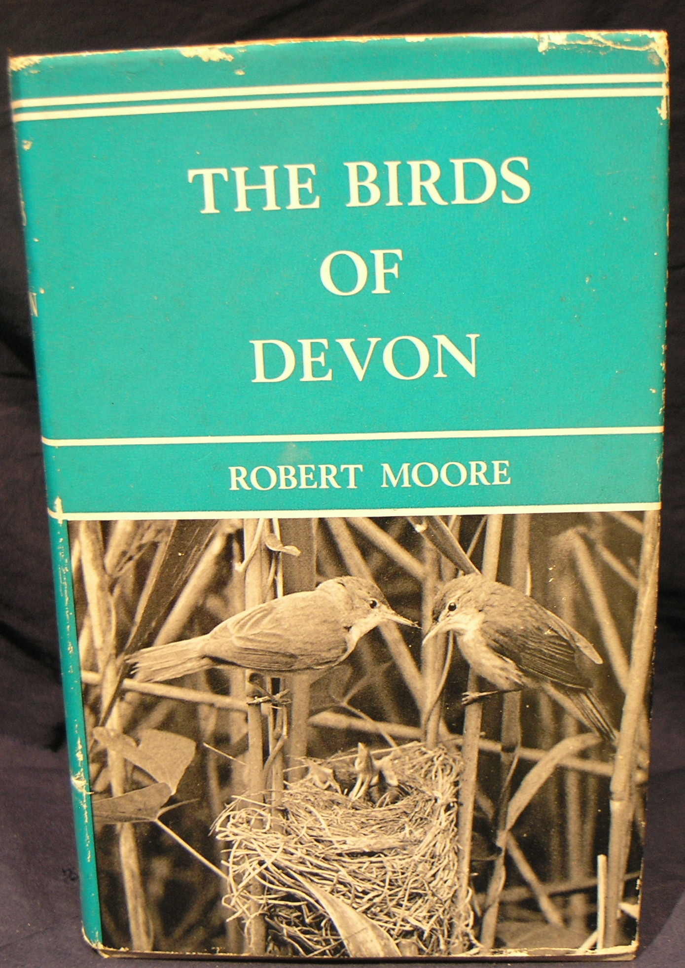 Image for Birds of Devon.