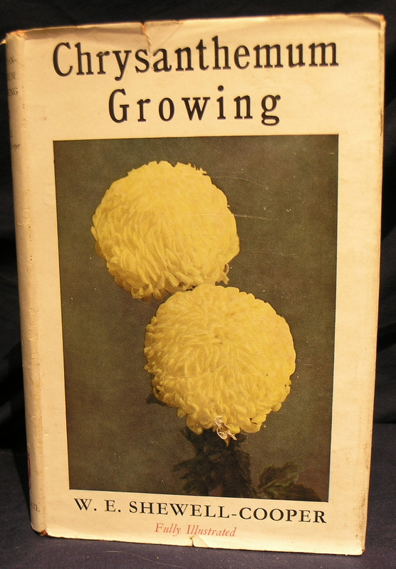 Image for Chrysanthemum Growing
