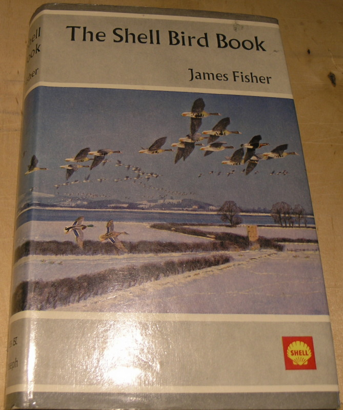 Image for The Shell Bird Book