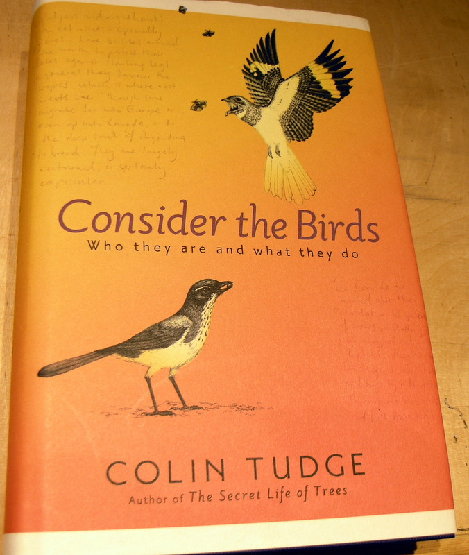Image for Consider the Birds